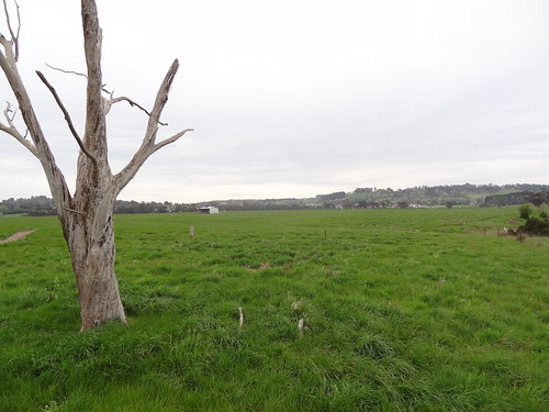 Native forest planted by Greenfleet in 2014 at Cardinia Creek Parklands (photo taken in 2014)