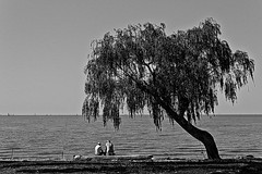 The fisherman's tree (Wal Wsg) Tags: thefishermanstree the fishermans tree elarboldelospescadores elarbol los pescadores canoneosrebelt3 byn bw agua water