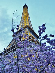 Tour Eiffel (JeanLemieux91) Tags: arbres trees árboles fleurs flowers flores jardin torre tower tour eiffel paris îledefrance france mars marzo march primavera printemps spring 2017