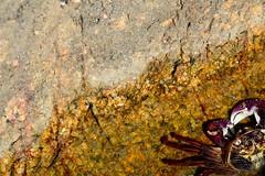 Croajingolong National Park (Cupaak) Tags: croajingolongnationalpark gippsland victoria australia nature grab animals wildlife rockpools beach cupaak