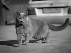 2017_03_11 (11)-2 (koppomcolors) Tags: koppomcolors katt cat kodak tmax100