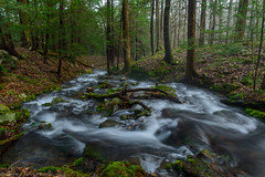 Mountain stream (clare j kaczmarek) Tags: mountainstream laurelhighlands moss forests hemlocks