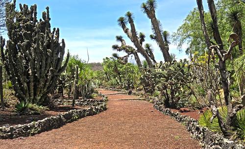 Jardin Botanico UNAM 14