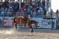 P3110262 (David W. Burrows) Tags: cowboys cowgirls horses cattle bullriding saddlebronc cowboy boots ranch florida ranching children girls boys hats clown bullfighters bullfighting
