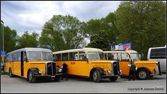 Drei alte Saurer-Postautos (Jolanda Donné) Tags: postauto postfahrzeuge postbus saurer oldies fahrzeug verkehrsmittelöv touristentransporter schweiz mai mai2015 8052015 nikoncoolpixp610