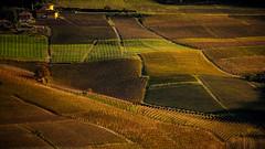 Wine lands colors (rinogas) Tags: italy piemonte langhe monfortedalba unesco wine color rinogas