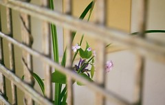 Ikebana of the Summer (VelannaRay) Tags: color calmness film flower shine nature outdoor light summer пленка цветы атмосфера настроение нежность природа икебана