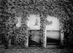 Garden Apartment (Demmer S) Tags: windows ivy nature wall vine covering exterior outdoors plant window covered foliage overgrown vines outside wallscape plants invading invasive invasion surface creeping crawling climbing leaves leaf walls building facade urban bw monochrome blackwhite blackandwhite blackwhitephotos blackwhitephoto