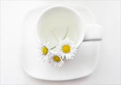 Three daisies and a cup... (maggie224 -) Tags: daisy cup saucer highkey pentax50mm mpt536 matchpointwinner