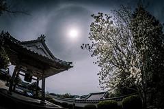 長徳寺からの日暈ーHalo watching from Tyotokuji Temple (kurumaebi) Tags: yamaguchi 秋穂 山口市 nikon d750 nature landscape 寺 halo ハロ temple 日本