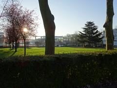 DSC02531 (Laurangedust) Tags: sunrise morning garden jardin université university rouen matin levé de soleil printemps