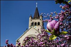 _SG_2017_03_7017_IMG_5488 (_SG_) Tags: basel basle schweiz suisse switzerland frühling spring grün green frühlingsbote blumen flowers church kirche pauluskirche pauluskirchepaulus pauluschurch