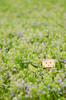 (Obiturtle) Tags: helios 442 nikon dof flower danboard nature color f2 d7000 swirly bokeh