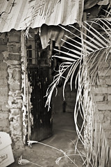 Behind the Door (dleany) Tags: 70200mmf28l 5dmkii bw palmfrond door worn adobe