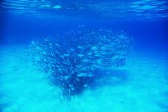 few steps from the beach (Landersz) Tags: philippines filippine coron palawan club paradise snorkeling turtle shark clownfish nemo dugong landersz canon 5dmk3 nimar gopro hero5