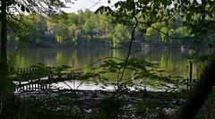 Greening Up (BKHagar *Kim*) Tags: bkhagar elkriver athens al alabama river water green nature greening limestonecounty