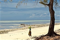 Down to the Sea (The Spirit of the World) Tags: zanzibar africa tanzania eastafrica local woman shellfish beach sand whitesand indianocean nature seascape landscape shore