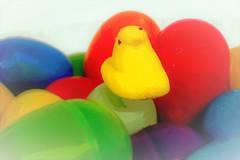 Soon there will be lots of Peeps on your local supermarket shelves!  Happy Easter (Rene' Slack) Tags: hensandchicks smileonsaturday slackadventure shiraz peeps