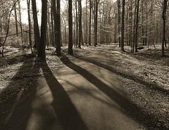 Shadows (Gert Vanhaecht) Tags: canonsx720hs belgium gertvanhaecht tree sunrays zoniënwoud monochrome shadow trees canon light nature pathway backlight