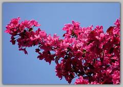 Bloesem (ditmaliepaard) Tags: bloesem boom a6000 sony tree