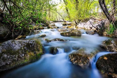 #alterrhein #rhein #diepoldsau #switzerland #kaff #home #spring #longexposure #silk #stream #river #forest #zen #nature #landscape #fmh