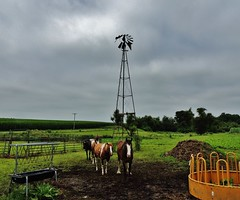 3 horses...(HWW) (BillsExplorations) Tags: windmill windmillwednesday waterpump horses three pasture barntour country hww vintage hay rural