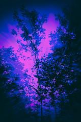 Treetops (ascholtz101) Tags: trees newyork photoshop us unitedstates union upstatenewyork centralnewyork newyorkstate ibmglen nikcollection