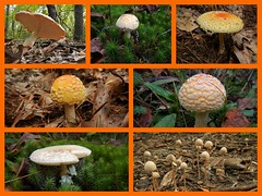 Mushrooms! (tquist24) Tags: autumn macro fall mushroom collage mushrooms fungi fungus bonneyvillemillcountypark nikoncoolpixaw100