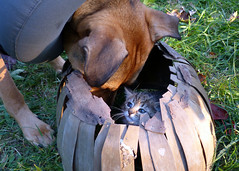 Is there room in there for me? (karen&2mutts) Tags: peekaboo sunny daisy animalfriends catinbasket kitteninbasket dogandcatbuddies