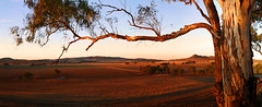 Boundary Road - Dookie Hills (Andrew Fleming Photography) Tags: sunrise australia andrew victoria hills dookie fleming mountmajor andrewfleming goulburnvalley centralvictoria greatershepparton mtsaddleback