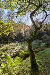 Black Clough (matrobinsonphoto) Tags: wood autumn trees light shadow orange sun sunlight black tree green colors yellow forest woodland back colorful branch colours seasons near district derbyshire peak jour bark trunk backlit colourful middle far autumnal clough contre bleaklow