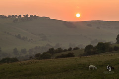 Sunset, Dovedale (andrewburtonphotos) Tags: uk sunset england landscape nationalpark sheep peakdistrict grazing graze dovedale