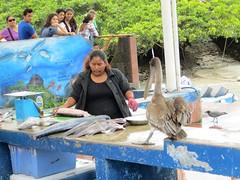 Galápagos - Isabela-1