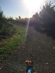 Ada Hayden Oscar (C Merry) Tags: statepark trees nationalpark pond iowa dachshund cornfields isu mixedbreed rescuedog amesiowa adahaydenpark handicappeddog oscarmadison funadventure specialneedsdog deathrowdog paralyseddog clinicaltrialforparalyseddogs