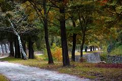 (natalybruce) Tags: autumn orange tree nature leaves yellow landscape photography earth save bulgaria vratsa