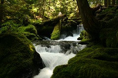 panther creek 2 (bulldog008) Tags: county wood usa green fall nature water creek forest river landscape washington moss rocks natural pacific northwest scenic logs columbia national area gorge lush cascade panther secluded skamania gifford pinchot