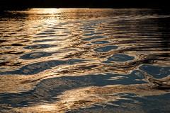 Idle Wake, Lake Shafer, Monticello, Indiana (Roger Gerbig) Tags: indiana boating monticello lakeshafer canon5dmkii rogergerbig