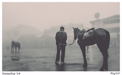   M A L L 2   (raw_roy) Tags: people horse india mist mountains fog mall culture hills rainy monsoon darjeeling toytrain indianhills indianculture himalays queenofhills darjeelingmall easternhimalays