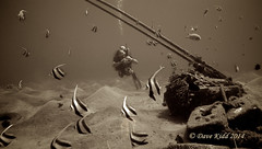 Two Tanks (someofmypics) Tags: sony egypt scubadiving sharm bannerfish anthias naamabay