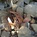 Trash on Pulau Ubin: Large piece of metal