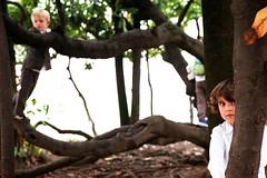 L'esplosione lentissima di un seme (Karlina - Carla Sedini) Tags: tree kids eyes play bambini occhi hide magnolia hanging albero gioco nascondersi appendersi