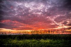 Schwadorf Sunset-35