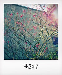 "#DailyPolaroid 10-9-14 #347 • <a style=""font-size:0.8em;"" href=""http://www.flickr.com/photos/47939785@N05/15382622175/"" target=""_blank"">View on Flickr</a>"