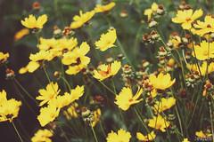 Butterfly (Zaparowana) Tags: flowers summer green nature yellow canon butterfly eos 50mm blog dof bokeh blogged 18 650d t4i 18mp