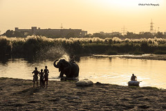 Silhouette (Ashmalikphotography) Tags: travel elephant silhouette kids canon delhi funtime