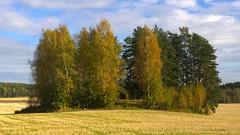 Autumn (talaakso) Tags: autumn fall field landscape fallcolors laub herbst autumncolours hst maisema syksy landskap countryscene maisemakuva ruska pelto hstfrger hausjrvi erkyl terolaakso talaakso