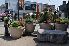 Diversity Plaza - Summer Planting