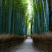 Path of the bamboo - Arashiyama