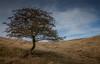 Alone on Roseberry (Brad@Shaw) Tags: uk blue england sky tree canon landscape eos scenery kiss unitedkingdom bluesky greatayton northyorkshire guisborough lonetree x3 500d roseberrytopping northyorkshiremoors neuk newtonunderroseberry eoskissx3 eosrebelt1i sigma1770mmf284dcoshsm