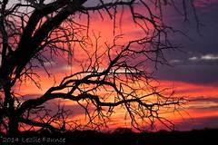 TX Sunrise (lezlievachon) Tags:
